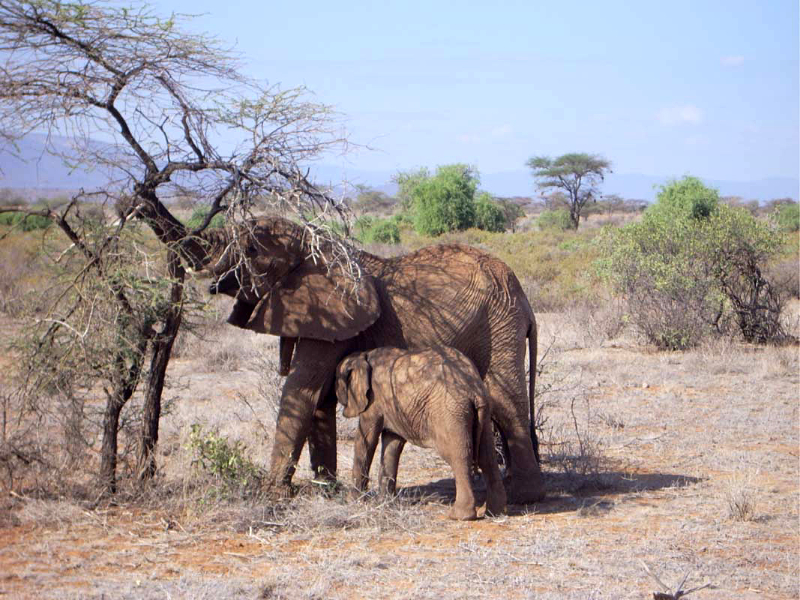 Time off in Kenya: elephants